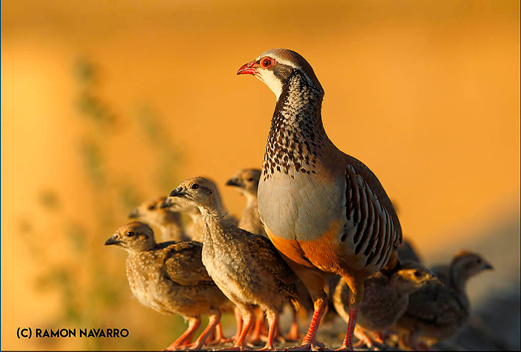 Opinión de Ramon Navarro fotógrafo de naturaleza y deportes